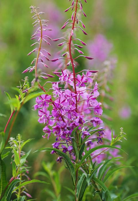 elevation-massage-wild-flowers-04